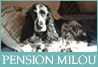 Pension Milou for Dogs on the Cote d'Azur